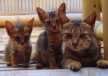 Cats of Gili